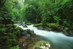 Strömen Sie im Regenwald, Costa Rica Stockbilder