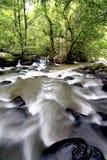 Strömen Sie im Wald während des tropischen Waldes Lizenzfreie Stockbilder
