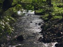 Strömen Sie Kreuz der Wald, die Sonne durch den Wald zu The Creek Lizenzfreies Stockfoto