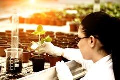 Strömende Flüssigkeit des Biologen in Blumentopf mit Sprössling stockbilder