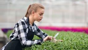 Strömendes Düngemittel des professionellen weiblichen landwirtschaftlichen Landwirts für wachsenden Betriebssämling stock video footage