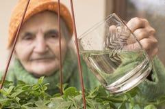 Strömendes Wasser der älteren Frau auf Blumen Stockfotos
