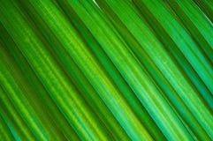 strömförande palmaen Arkivbild
