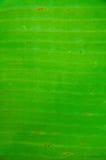 strömförande palmaen Royaltyfri Bild
