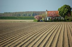 strömförande potatisfjäder för fält arkivbilder