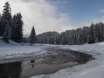 Strömflödena till och med skogen Fotografering för Bildbyråer