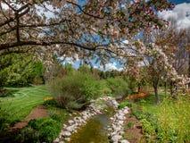 Strömma att flöda till och med en parkera med blommor och träd lite varstans Royaltyfria Foton