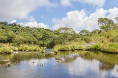 Strömma i en skog royaltyfri foto