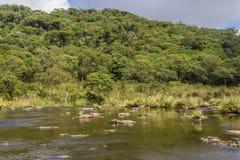 Strömma i en skog arkivfoton