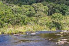 Strömma i en skog arkivfoto