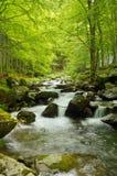 Strömma i skogen Royaltyfria Bilder