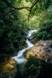 Strömma i skogen Fotografering för Bildbyråer