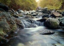 Strömma i skogen Arkivfoto