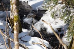Strömma i vinter med snow Royaltyfri Bild