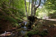 Strömma med den lilla vattenfallet i en medelhavs- skog med mossa arkivbilder