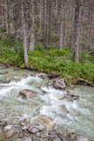 Strömma Studeny potok i höga Tatras, Slovakien royaltyfria foton