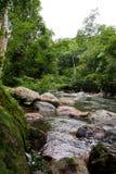 Strömmar av vattenflöde och vaggar i skogen, vattenfall fotografering för bildbyråer