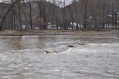 Strömmar i den turbulenta floden Royaltyfria Foton