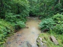 Strömmen eller liten vik i skogen eller träna med vaggar fotografering för bildbyråer