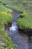 Strömmer i grässlätten Royaltyfri Foto