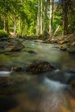 Strömmer i skogen Fotografering för Bildbyråer