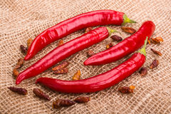Strąki gorący pieprzu i chili peperoncini na burlap tle Fotografia Stock