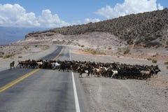 Straße auf Calchaquíes Tal nahe Salta Stockfotos