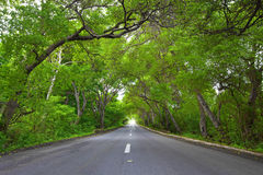 Straße auf Curaçao lizenzfreie stockfotos