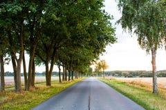 Straße auf dem Gebiet begleitet von der Reihe von grünen Bäumen, von Skylinen und von Natur auf Hintergrund Landschaft des flache Lizenzfreie Stockfotografie