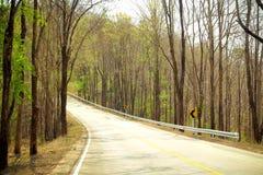 Straße auf dem grünem Gebiet und Waldland Stockbild