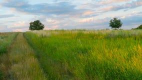 Straße auf dem grünen Gebiet bei Sonnenuntergang Stockfotos