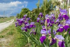Straße auf dem Hintergrund von Iris Stockfoto