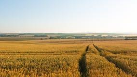 Straße auf dem Weizengebiet Lizenzfreie Stockfotografie