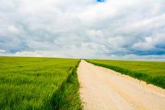 Straße auf den Gebieten des grünen Weizens Lizenzfreies Stockbild