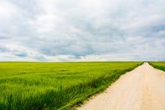 Straße auf den Gebieten des grünen Weizens Stockfotos