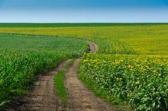 Straße auf einem Gebiet der Sonnenblumen lizenzfreies stockfoto