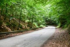 Straße auf Schatten-Wald bei Gargano Stockbild