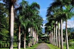 Straße ausgerichtet durch Palmen Stockbilder