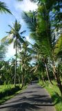 Straße Bali Stockbild