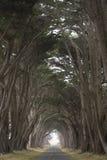 Straße bedeckt durch eine Überdachung von Bäumen. Lizenzfreies Stockbild