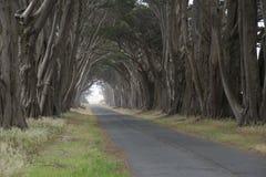 Straße bedeckt durch eine Überdachung von Bäumen. Lizenzfreie Stockfotografie