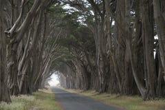Straße bedeckt durch eine Überdachung von Bäumen. Stockfoto