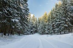 Straße bedeckt im Schnee durch einen Winterwald Stockfoto