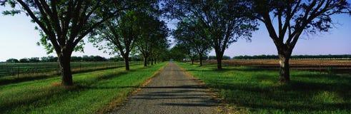Straße in Boone Hall Plantage, Sc Lizenzfreie Stockfotografie