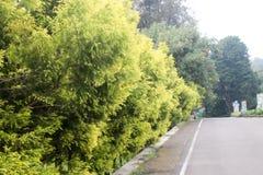 Straße in botanischem Garten Cibodas in Puncak, Indonesien Lizenzfreie Stockfotografie