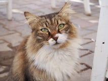 Straße Cat Portrait Stockfotografie