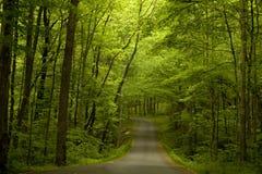 Straße in das Holz lizenzfreies stockfoto