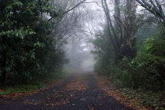 Straße in den Nebel Lizenzfreies Stockfoto