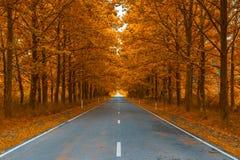 Straße in den Späthölzern lizenzfreie stockbilder
