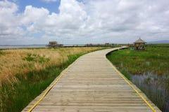 Straße in den Sumpfgebieten Stockfotografie